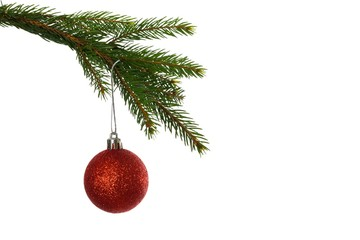 Red christmas bauble hanging from branch
