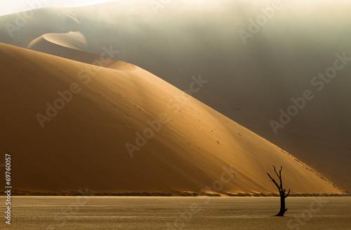 Papiers peints Desert de sable Dünenlandschaft