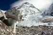 Bizarre mushroom on a glacier on the way to Everest Base Camp