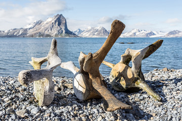 Old whale bones on the coast of Spitsbergen, Arctic