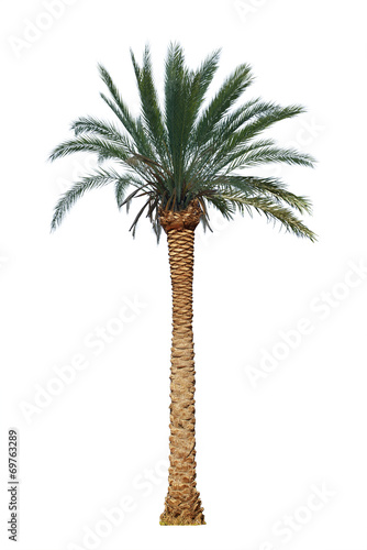 Keuken foto achterwand Palm boom palm tree isolated