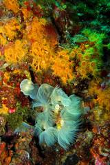 flora subacquea