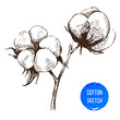 Hand drawn cotton brunch