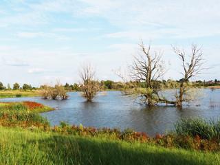 Wasser - geflutetes Feld