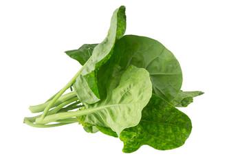Fresh kale vegetable on white