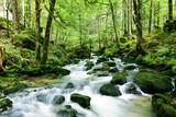 Fototapety Wasserfall im Wald