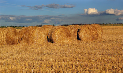 Bales of hay on the stubble field