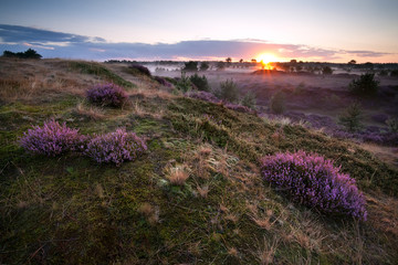 sunrise over hills with heather