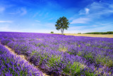 Fototapety LAVENDER IN SOUTH OF FRANCE