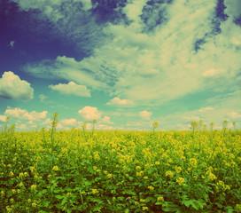 rapeseed field - vintage retro style