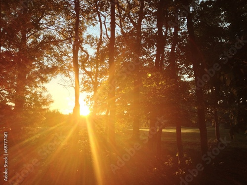 canvas print picture Sonnenuntergang im Wald