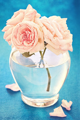 composition with a fresh pink roses in a vase .blue background.