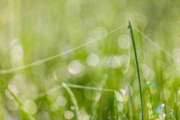 grass with water drops in the early morning