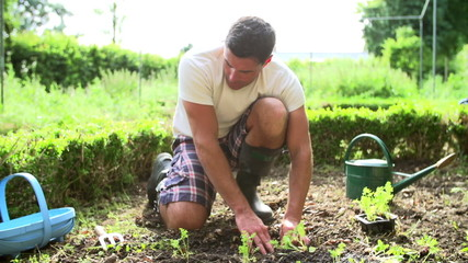 Man Planting Seedlings In Ground On Allotment
