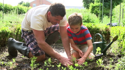 Father And Son Planting Seedling In Ground On Allotment