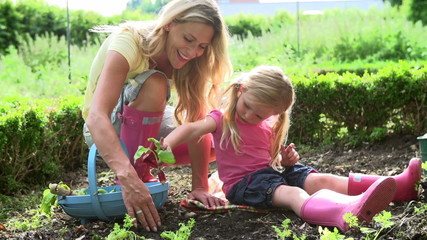 Mother And Daughter Picking Radish On Allotment
