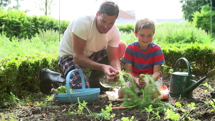Father And Son Picking Carrots On Allotment