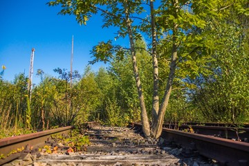 Gewachsener Baum bremst Schienenverkehr