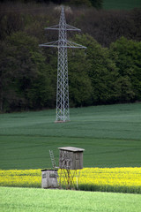 Rapsfeld mit Hochsitzen und Strommast