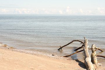 beach skyline with old tree trunks in water