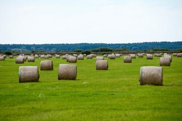 rolls of hay in green field