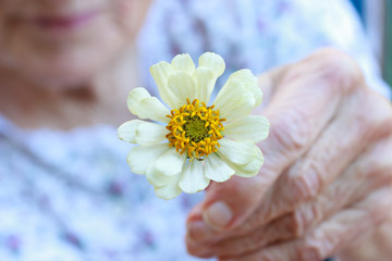 Senior lady holding white zinnia