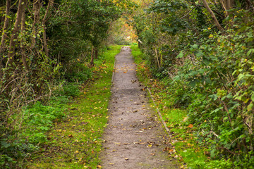road in the park, Hythe, England