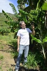 Farmer examining the banana plantation