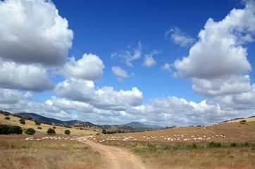 landscape with flock