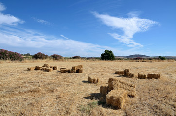 landscape with bales of straw and oleander