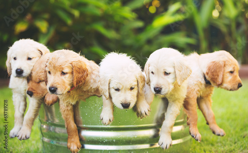 Leinwandbild Motiv Golden Retriever Puppy