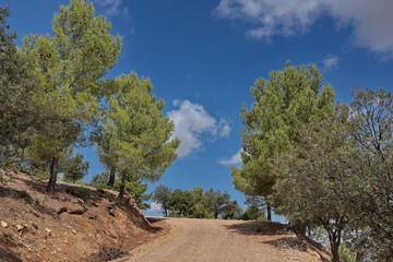 Route dans la forêt