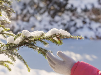 hand and branch of fir outdoor