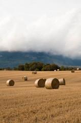 Straw bales in the fields. Farmland