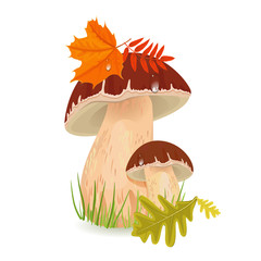 Edible mushroom porcini for you design