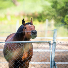 Horse touching a electric fences in summertime.