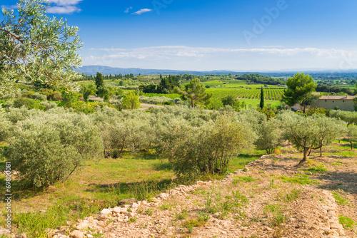 Aluminium Olijfboom olive plantation
