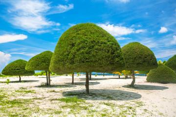 Decorative shaped trees on the beach on Koh Phangan island, Thai