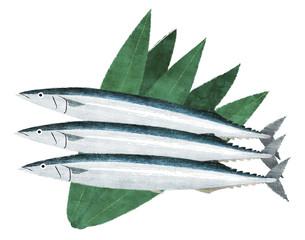 秋刀魚ver.1