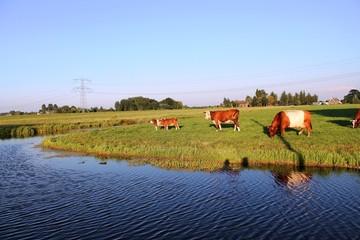 Vacas y terneras en la pradera frente a un canal