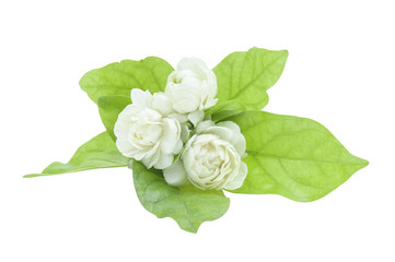 Jasmine flower and leaves isolated with clipping path.