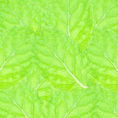 Fresh mint leaves background