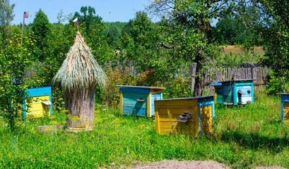 Apiary   in the sunny day