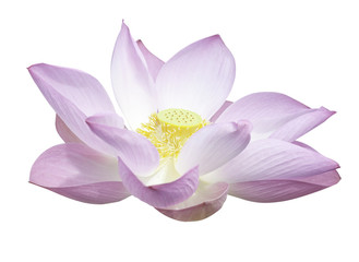 Lotus isolated with clipping path.