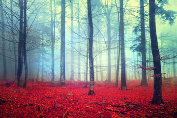 Fantasy autumn forest scene