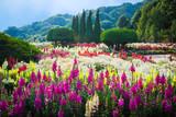Fototapety Flower Garden