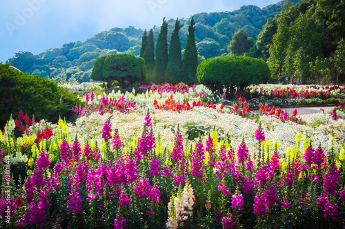 obraz PCV Flower Garden