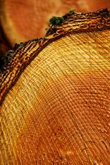 Holzscheibe mit Jahresringen