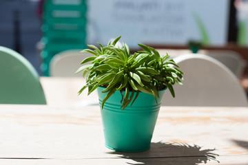 aloe plant on table