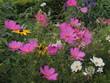 canvas print picture - Flores